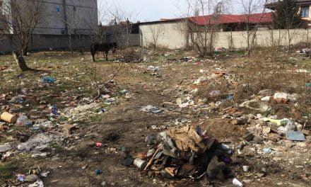 Asta este Constanța anului 2018? Munți de gunoaie, șobolani și cai la păscut în buricul orașului