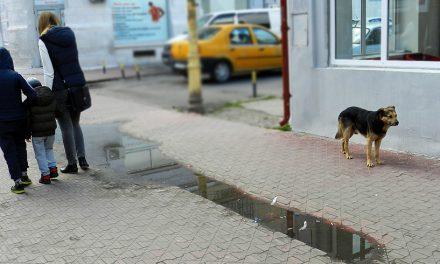 Strategie de turism? Ce-ar fi să începem cu adunatul rahatului de pe trotuare?