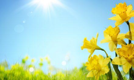 În sfârșit, vine primăvara la Constanța. Cum va fi vremea în următoarele zile
