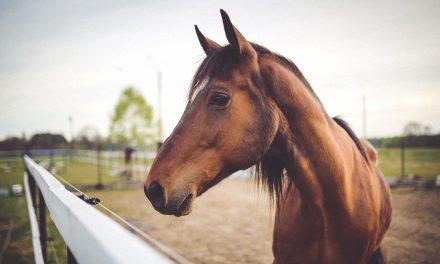Un copil a murit după ce a fost lovit de un cal și târât pe câmp