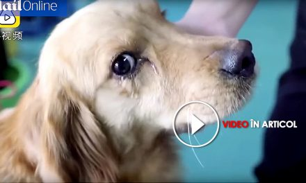 Un cățel varsă lacrimi după ce a fost salvat de la abatorul unde urma să fie măcelărit