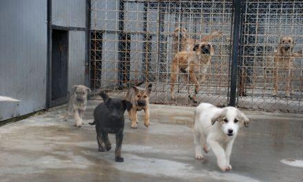 Primăria Constanța angajează hingheri și îngrijitori de câini. Salariu atractiv, nu se cere diplomă de Bac