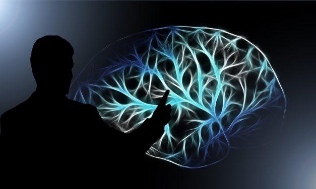 Structura creierului, diferită în funcție de statutul economico-social