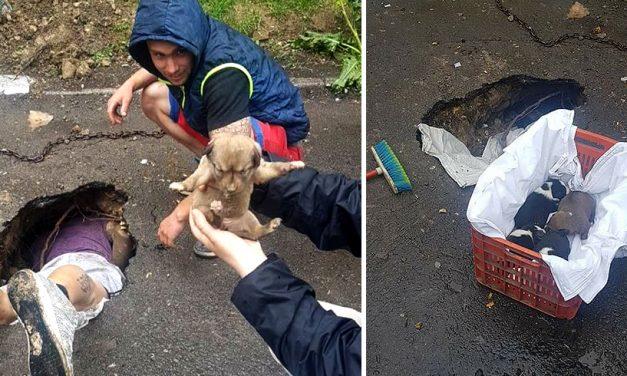 Cinci cățeluși, salvați dintr-o groapă din asfalt ce fusese astupată din rea-voință. FOTO