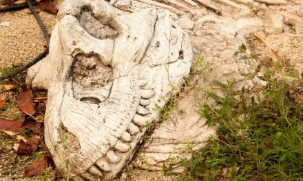 Descoperire unică în Europa: Pe teritoriul României au trăit, odată cu dinozaurii, mamifere
