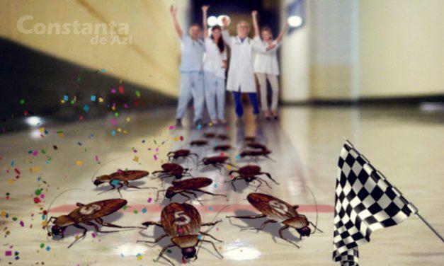 Delir în Spitalul Judeţean Constanţa. Personalul medical se distrează cu pariuri pe curse de gândaci
