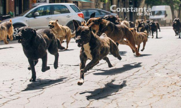 O nouă încercare de Cartea Recordurilor. Primăria Constanța va organiza un flashmob cu maidanezi!