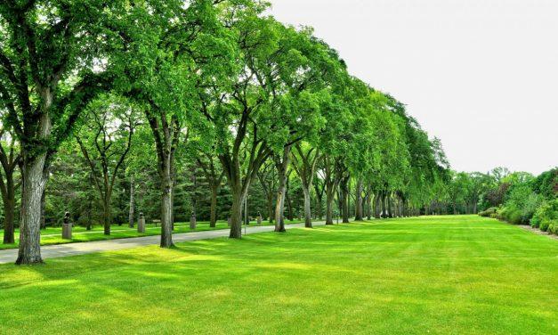 300 de hectare de noi parcuri și spații verzi în Constanța? PNL a depus proiectul și îl somează pe Făgădău să îi dea curs