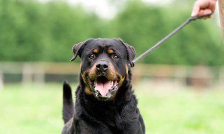 Ai câine? Riști amenzi de până la 1.500 de lei dacă îl scoți la plimbare fără botniță