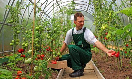 Care este data limită până la care fermierii trebuie să depună declarația unică
