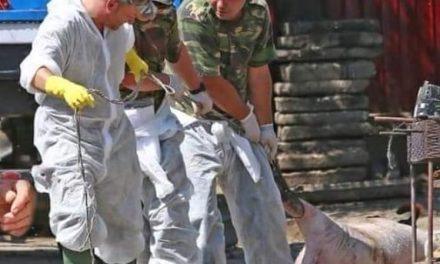 LMP, anunț important pentru militarii implicați în combaterea efectelor pestei porcine! Nu acționați decât în baza sarcinilor și ordinelor militare!