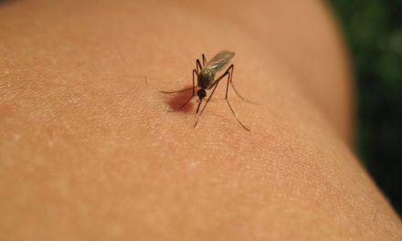 Primăria Cernavodă ia măsuri împotriva țânțarilor. Copiii și bătrânii trebuie să rămână în casă