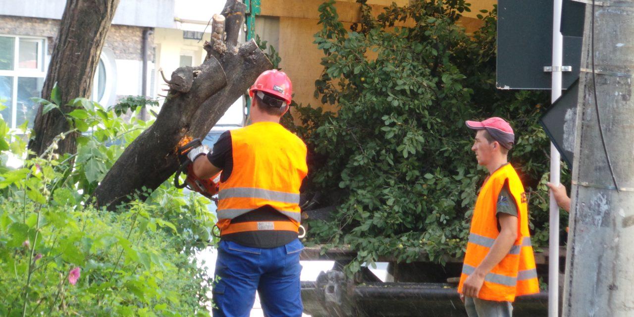 15 milioane de lei pentru tăierea și toaletarea copacilor din Constanța. Atât dă Primăria…
