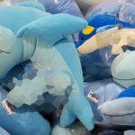 """Jucării de pluș obscene, vândute la un magazin de """"confiscate"""" din Constanța"""