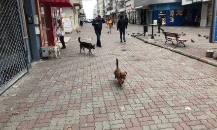 """Constanța, orașul unde s-a """"furat"""" Crăciunul și haitele de câini fac legea"""