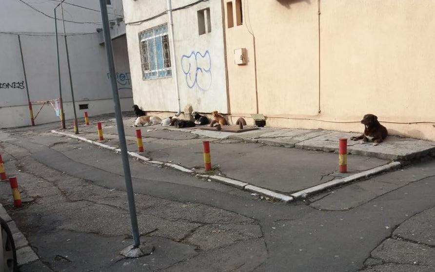 Cum tratează Primăria Constanța problema maidanezilor? Iată de ce nu are Clujul câini pe străzi
