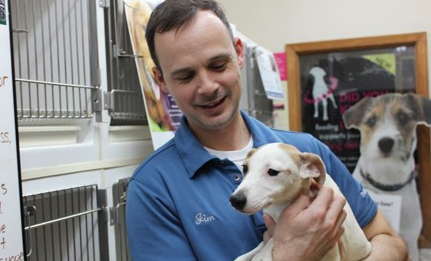 Soluții la eutanasiere. Pet shop-urile nu mai au voie să vândă decât câini și pisici care provin din centrele de ecarisaj