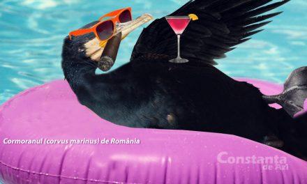 """Cormoran de România către cormoranii din restul lumii: """"Tot săraci, tot săraci?"""""""