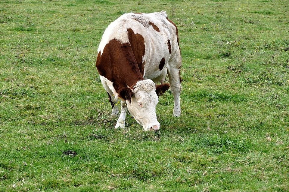 Primăria Cernavodă, anunț pentru crescătorii de animale