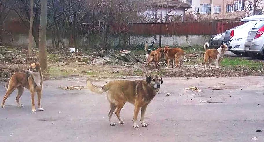 Va fi făcut primul recensământ al maidanezilor din Constanța. Echipe de voluntari vor număra câinii fără stăpân