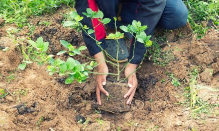 Anunț de la Primăria Cernavodă pentru deținătorii de terenuri
