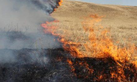 Pentru a preveni incendiile, Primăria Cernavodă anunță interzicerea arderii nesupravegheate a vegetației uscate