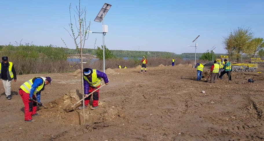 Plantări de arbori în parcul Via Verde din Cernavodă, cel mai mare parc din județ