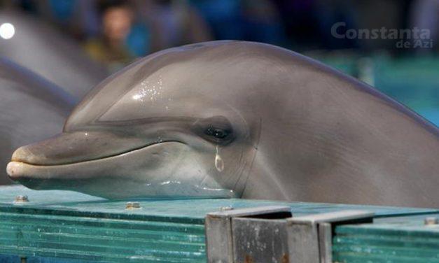 Delfinii de la Delfinariu au fost mutați într-un bazin special, umplut cu propriile lacrimi