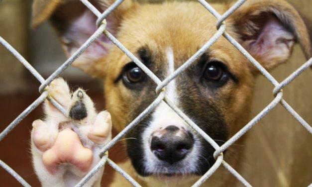Cum poți adopta gratuit un cățel de la Adăpostul pentru animale din Constanța