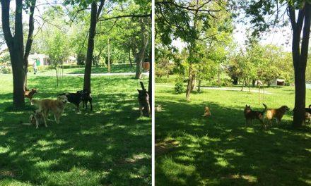 """Haită de nouă maidanezi în parcul Tăbăcărie. """"Nu s-au lăudat cei de la Primărie că îi adună?"""""""