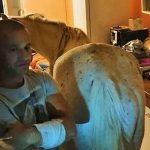 VIDEO. Nu e glumă. Poliția locală a găsit un cal în bucătăria unei garsoniere de la etajul 4