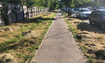Alo, Primăria! Ați uitat să strângeți iarba tăiată. Constanța arată ca un ogor ars de soare