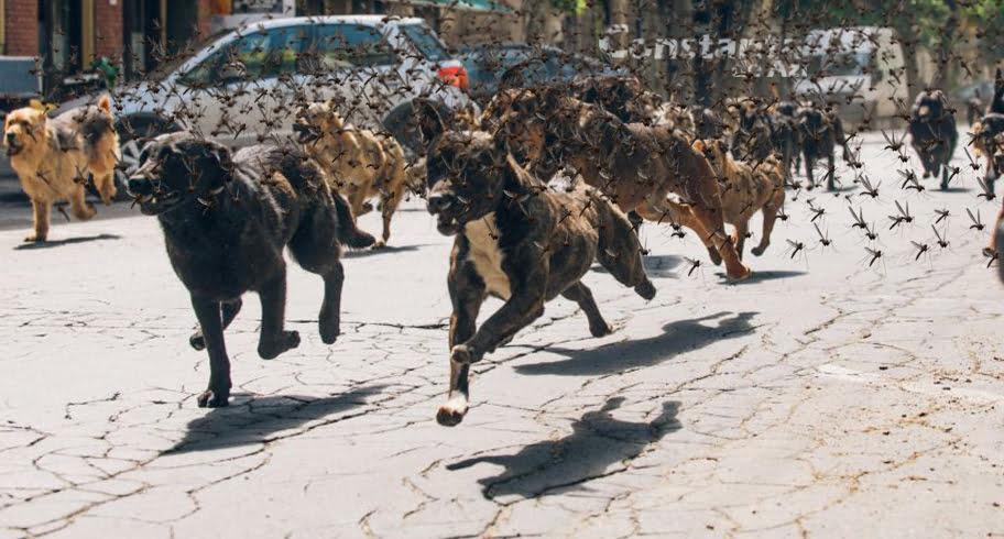 Măcel! Haită de maidanezi, atacată de un roi de țânțari tigru în Parcul Tăbăcărie