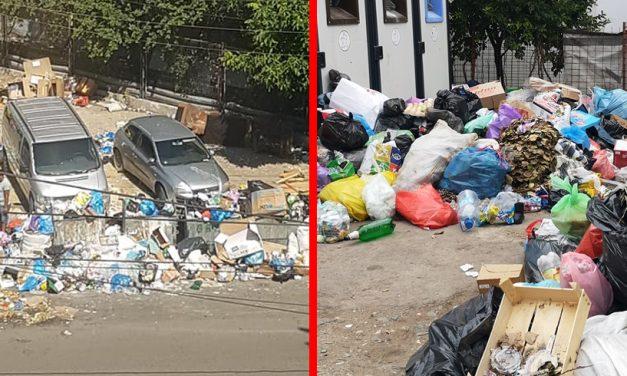 """FOTO. Munți de gunoaie pe străzile Constanței. """"O să ne mănânce șobolanii!"""""""