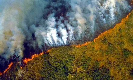 Imagini cu incendiul care distruge 20% din oxigenul Planetei. Pădurea amazoniană, declarată urgență internațională