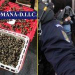 Patru indivizi din Constanța, arestați pentru trafic de minori, proxenetism și trafic de droguri