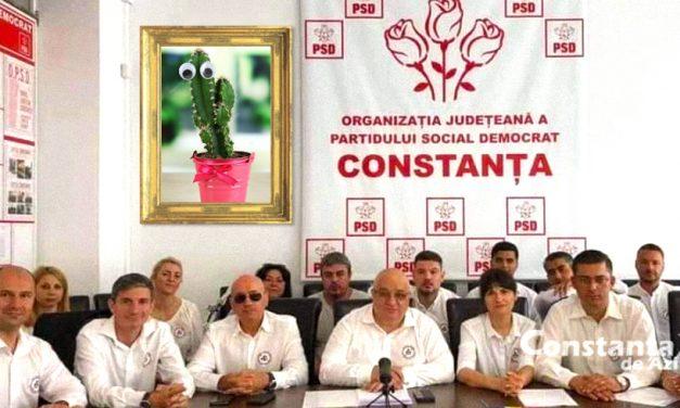 """Pesediștii constănțeni au înlocuit portretul lui Dăncilă cu cel al unui cactus. """"De acum, la el ne închinăm!"""""""
