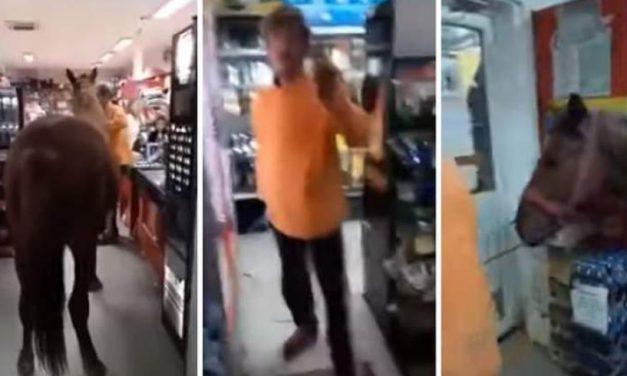 VIDEO. Ca să nu lase animalul singur afară, un românaș a intrat cu calul în supermarket