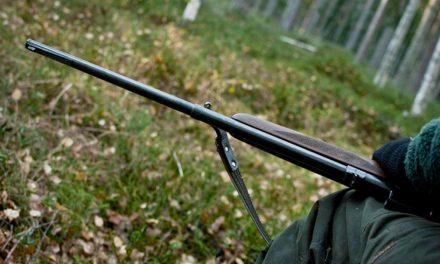 Pădurarii vor avea arme letale. Noile reglementări privind personalul silvic, votate de Parlament