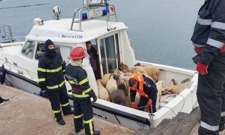 Intervenție pentru salvarea oilor de pe nava scufundată în Portul Midia. 32 de animale au fost recuperate