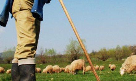 Un copil de 13 ani a fost vândut de bunica sa unui cioban, pentru o capră și câțiva lei