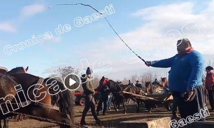 VIDEO. Cai bătuți cu cruzime, la un eveniment de Bobotează. Poliția a deschis dosar penal
