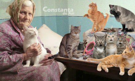 O mămăiță cu 136 de pisici locuiește de 15 ani într-un salon din Spitalul Județean Constanța