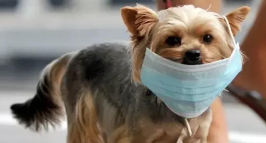 Nu vă trebuie declarație pe propria răspundere pentru a plimba câinele. La verificare, se vede pe buletin că este adresa din jurul blocului