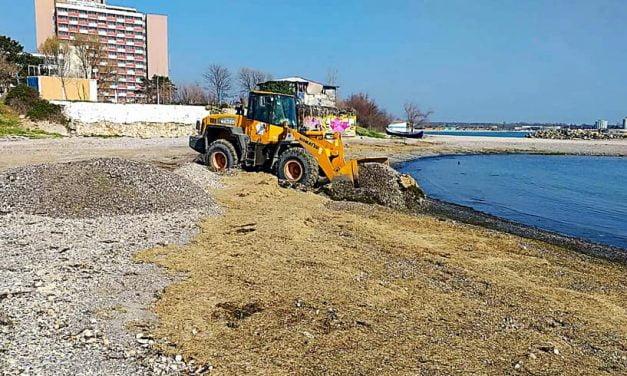 Plaje invadate de alge. Bogdan Bola: Rog toți constănțenii care observă astfel de situații să ni le aducă la cunoștință