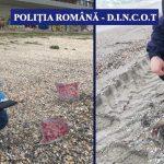 """Sute de pungi cu cireșe aduse de valuri pe plajele din Constanța. """"În spate se află o întreagă rețea"""""""