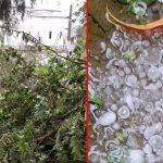 VIDEO. Furtună cu grindină la Constanța. Copaci căzuți și drumuri blocate din cauza vijeliei