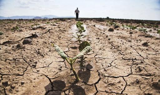 Agricultorii constănțeni acuză Guvernul că și-a bătut joc de ei și i-a ajutat doar în campania electorală