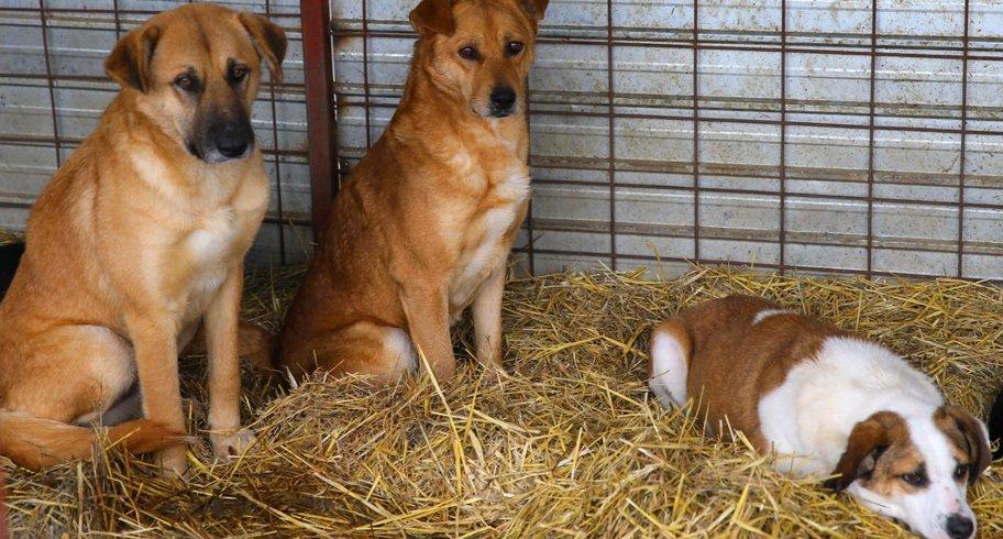 Reîncepe programul pentru adoptarea unui animal abandonat. Viceprimarul Rusu anunță reconstruirea biobazei