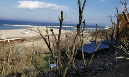 """GALERIE FOTO. Operațiunea """"Ciotu"""": cum arată copacii de pe taluzul plajei Modern după toaletările Primăriei"""